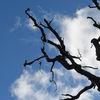 Grenar - Branches
