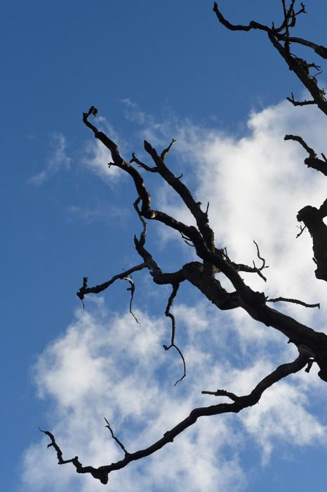 photoblog image Grenar - Branches