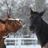 Hästar - Horses
