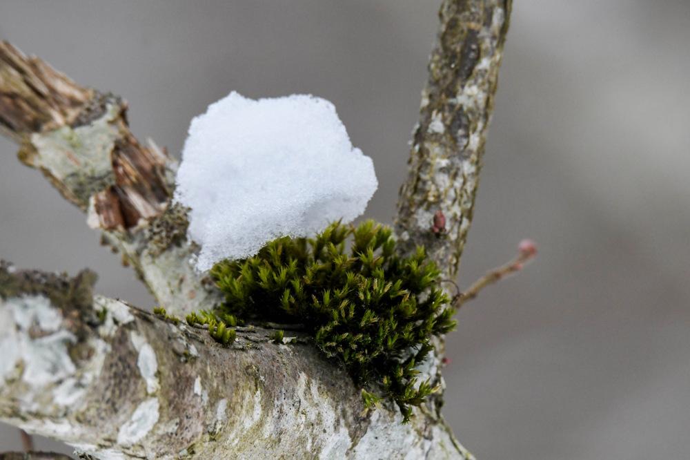 photoblog image Mossa - Moss