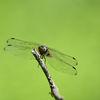 Trollslända - Dragonfly
