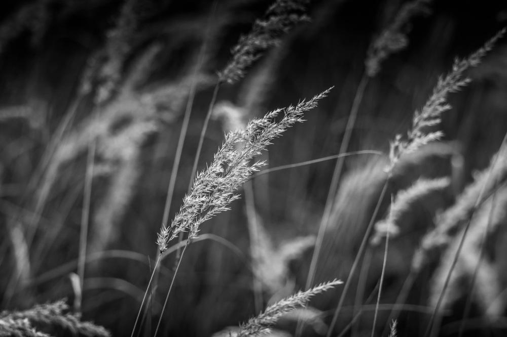 photoblog image Gräs - Grass
