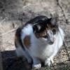Katt - Cat