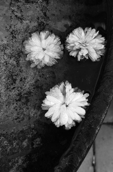 photoblog image Blommor - Flowers