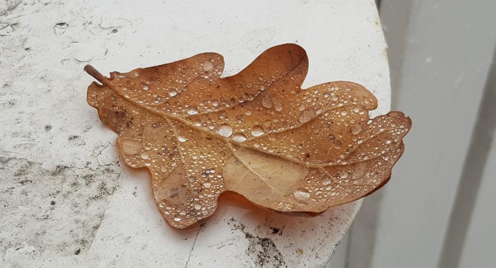 photoblog image Löv - Leaf