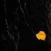Löv - Leaf