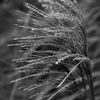 Gräs - Grass