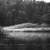 Vid ån - By the river