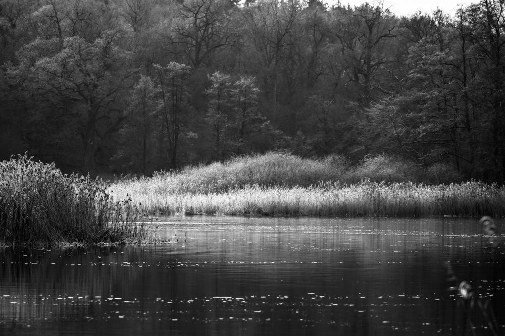 photoblog image Vid ån - By the river
