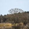 Träd - Trees