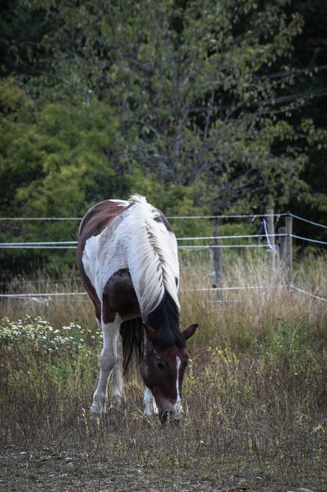 photoblog image Häst - Horse
