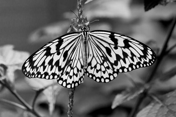 photoblog image Butterfly