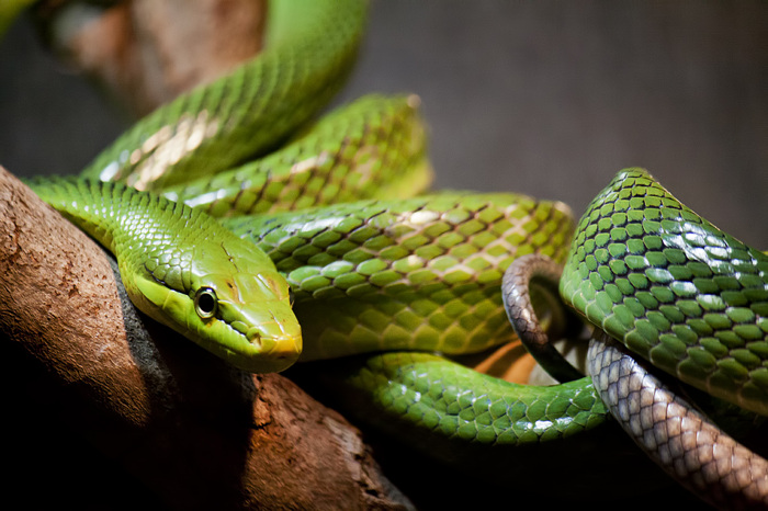 photoblog image Another Snake