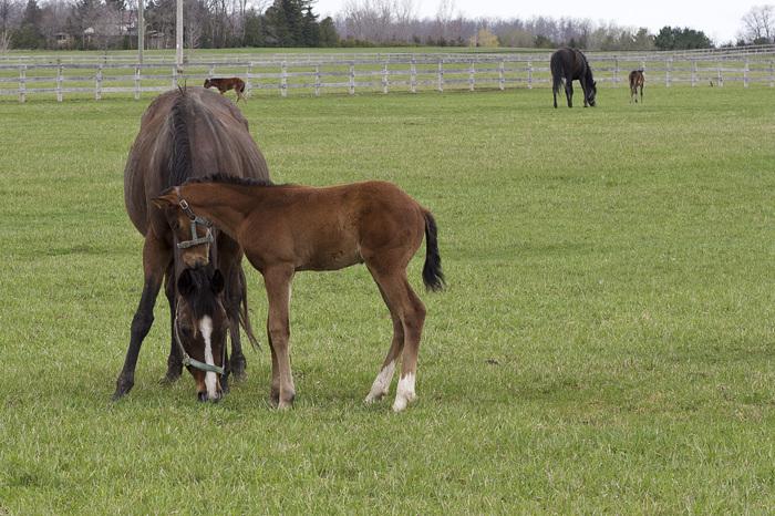 photoblog image Pony