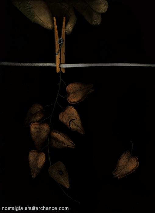 photoblog image Zyrynology: The Fall Of Autumn