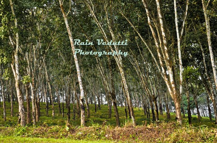 photoblog image calabar (326).jpg