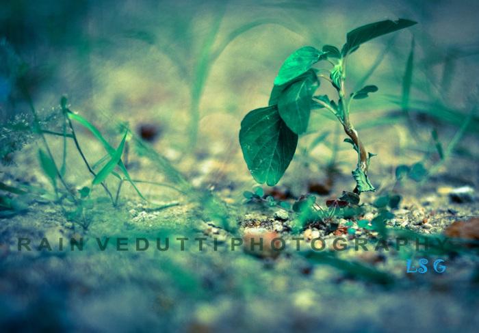 photoblog image dsc 0117-2.jpg