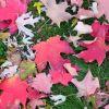 captured leaves design