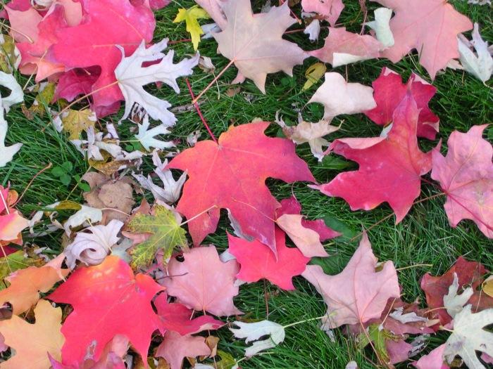 photoblog image captured leaves design