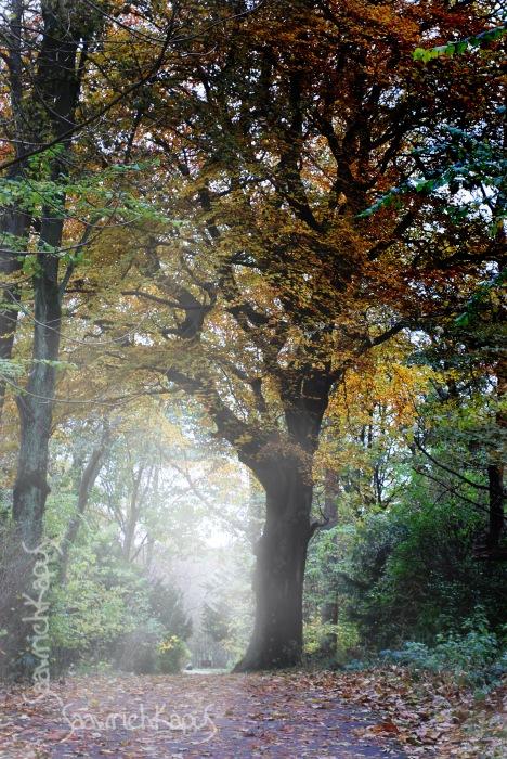 photoblog image Dreamy Fog effect...