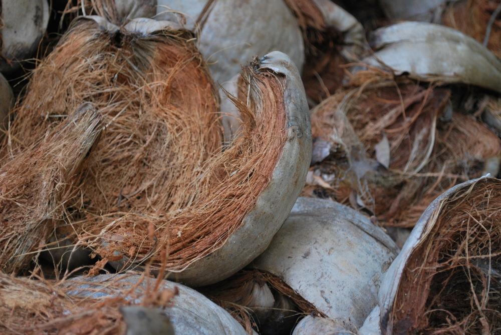 photoblog image Coconut Coir.... left to dry