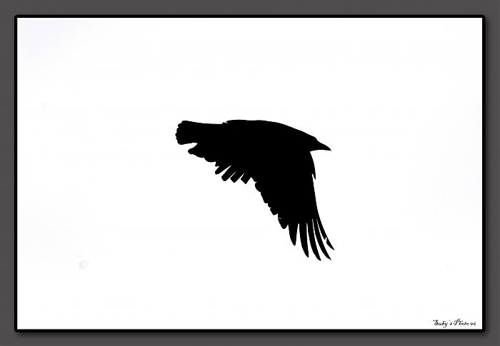 photoblog image Bird in Silhouette