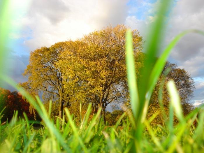 photoblog image Prospect park
