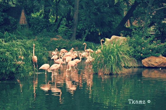photoblog image Flamingos