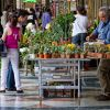 <br>Images of Florence - 6: The plant seller