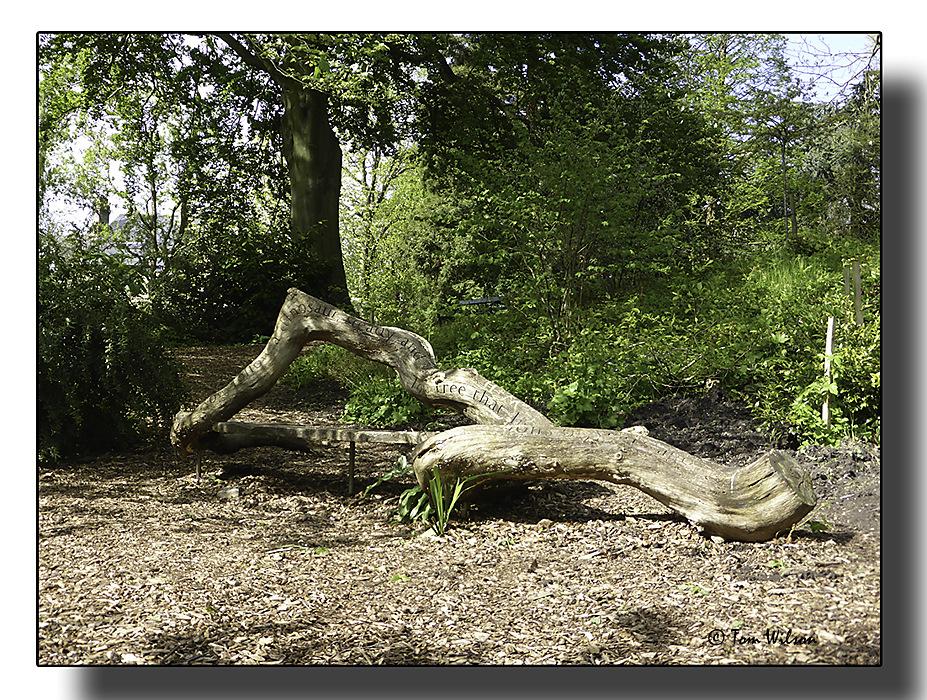 photoblog image Not just a fallen tree...
