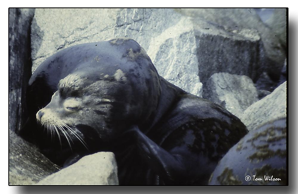 photoblog image Sea Lion