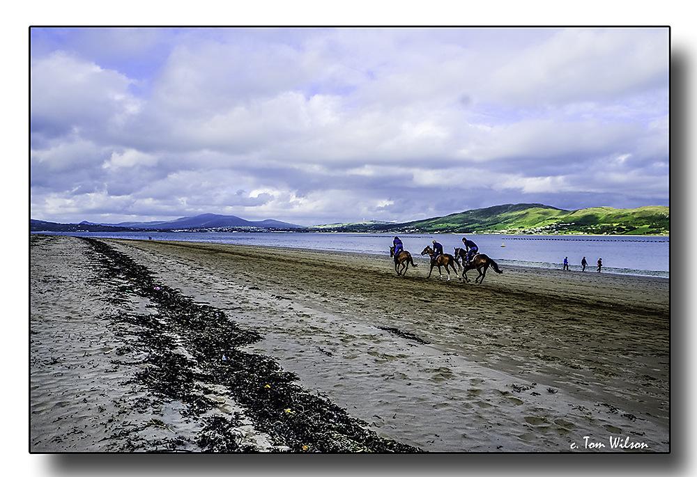 photoblog image Exercising the horses