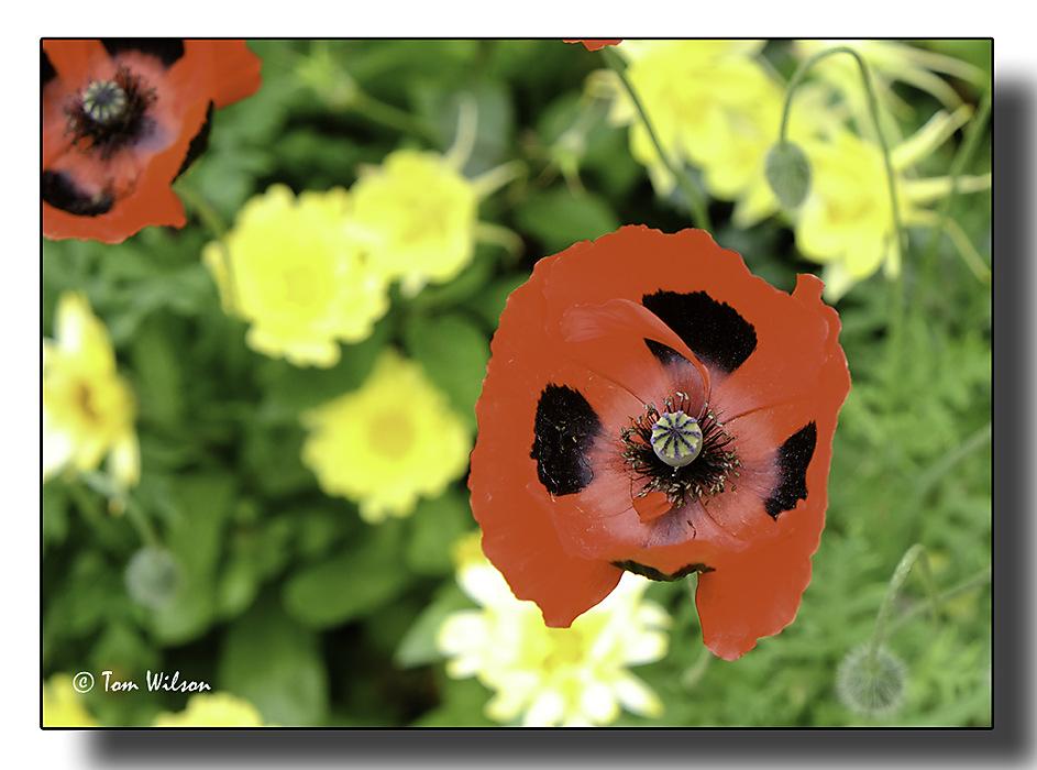 photoblog image Colour Contrast