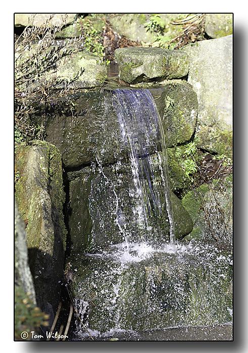 photoblog image Splash
