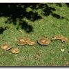 A nice group of fungi