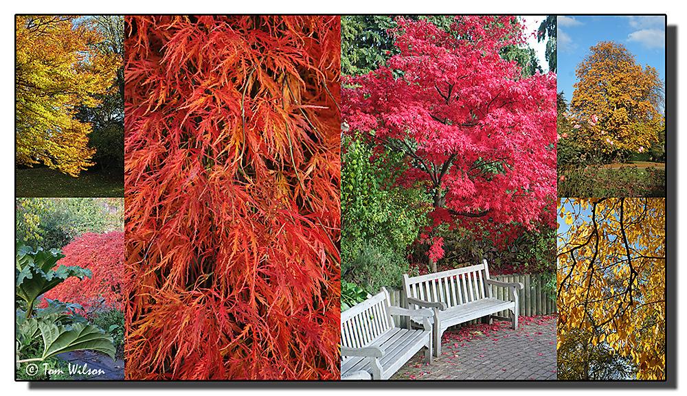 photoblog image Autumn Colours