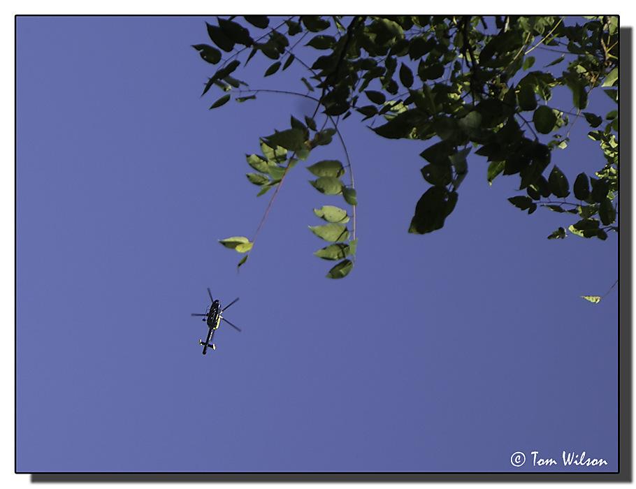 photoblog image Alien invader