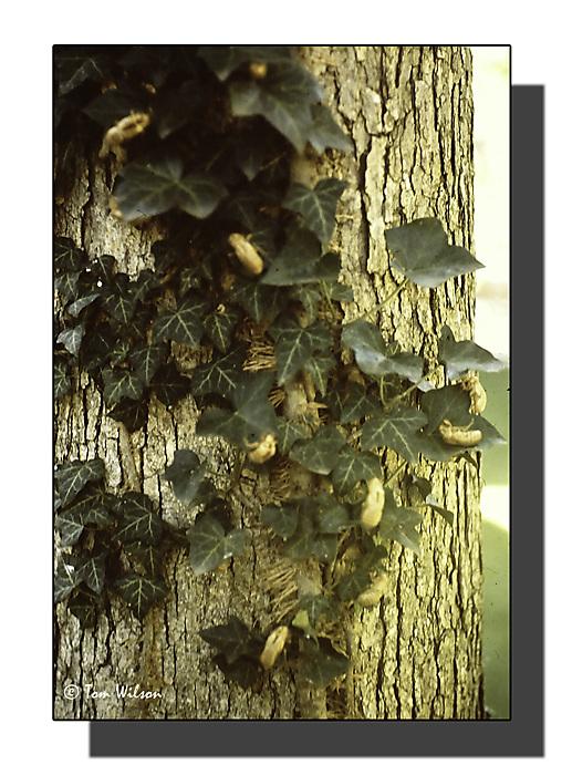 photoblog image 17-year locust