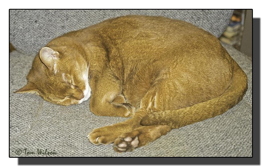 photoblog image Sassy sleeping