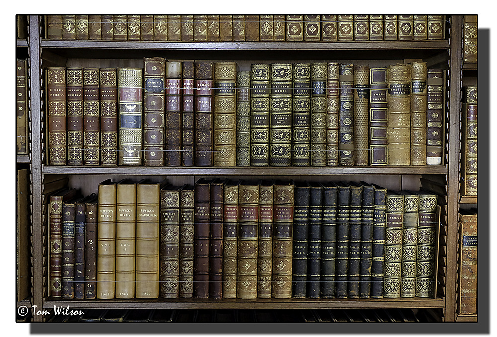 photoblog image Saltram - books in the library
