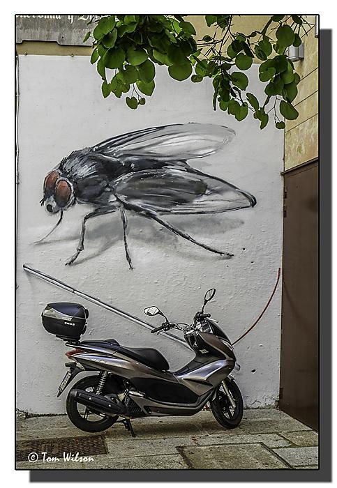 photoblog image Street Fly