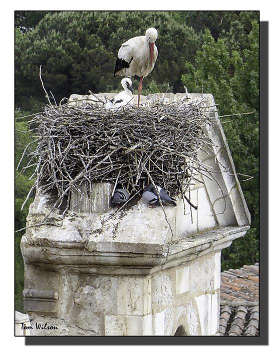 photoblog image Zamora - stork
