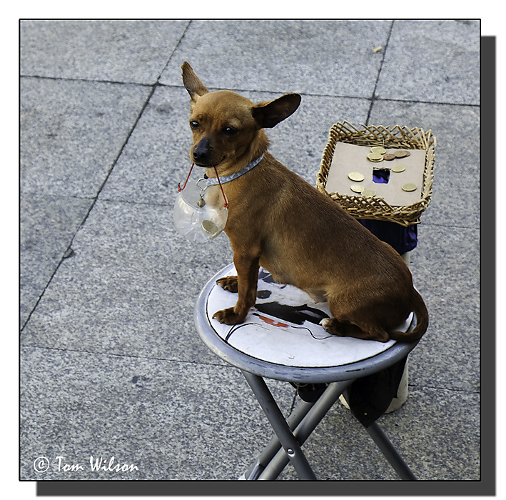 photoblog image Porto - street musician's assistant