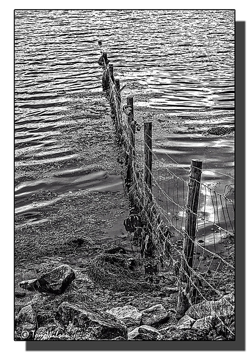 photoblog image Fence in the water