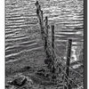 Fence in the water