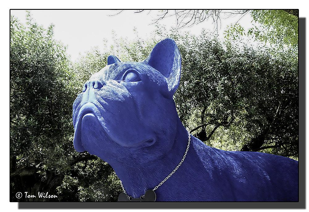photoblog image Lisbon - Blue Dog