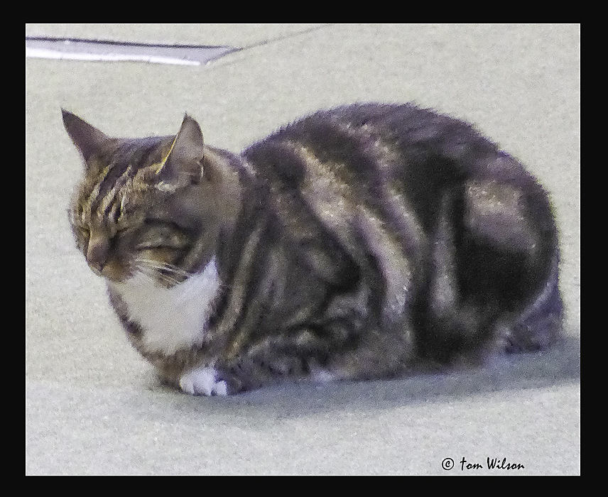 photoblog image Wells - Cathedral cat