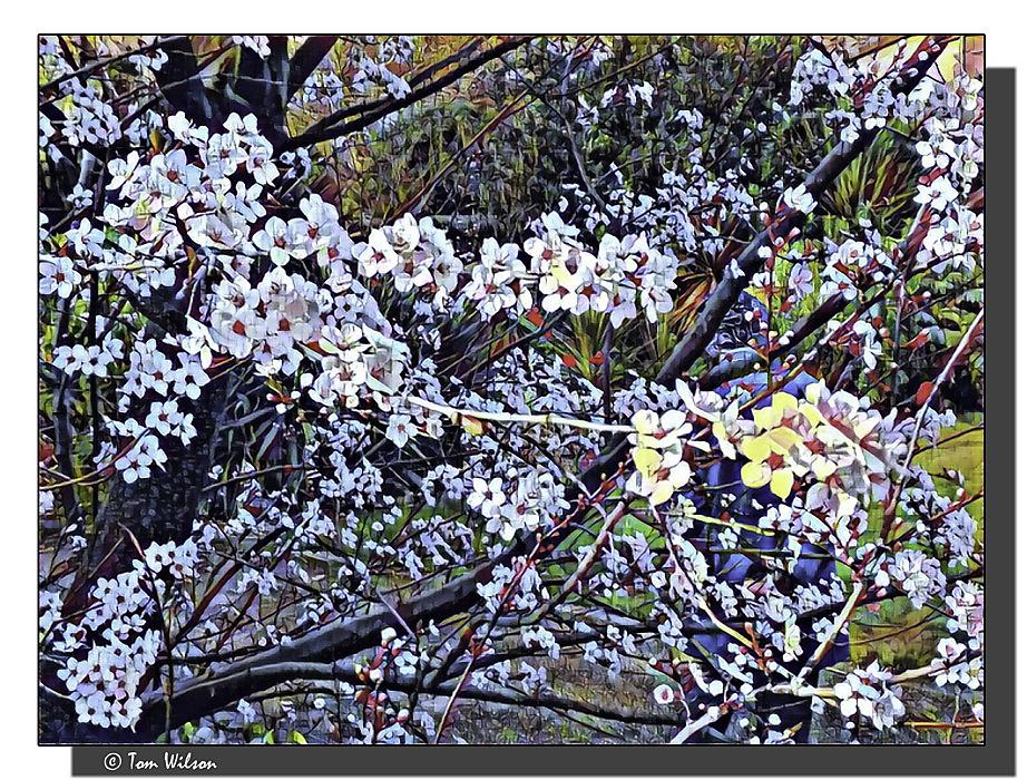 photoblog image Blossom Time