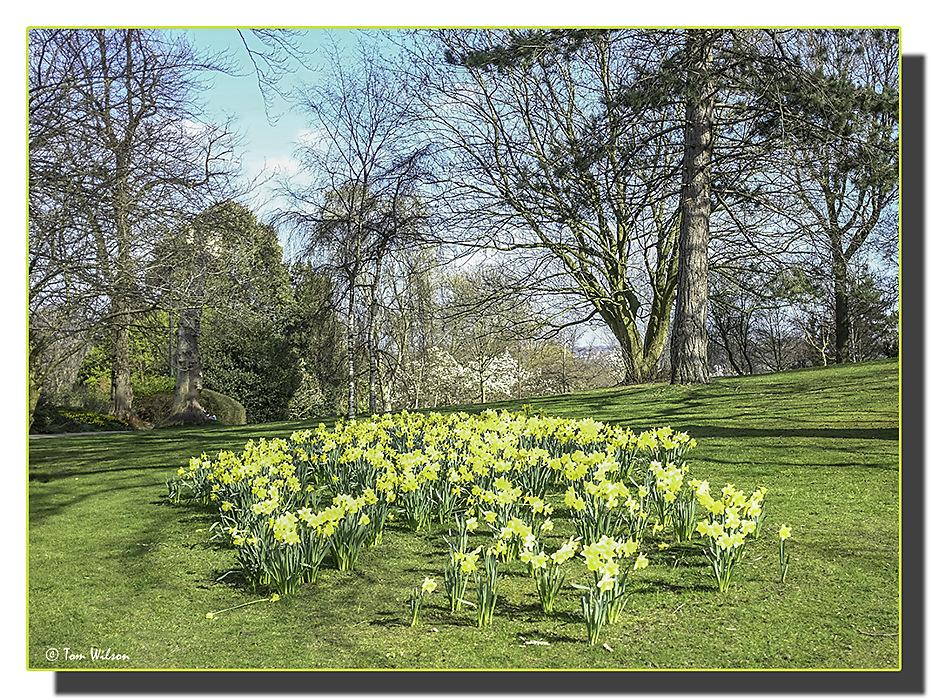 photoblog image Spring-burst