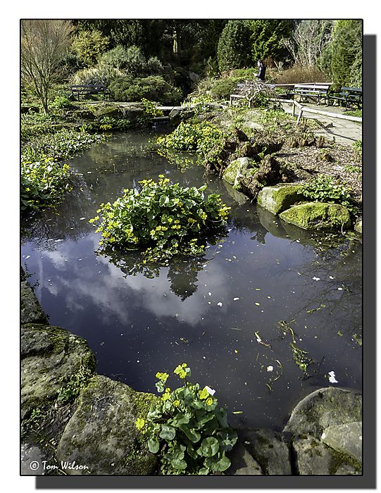 photoblog image Water feature